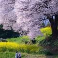 写真: 桜の下の姉妹