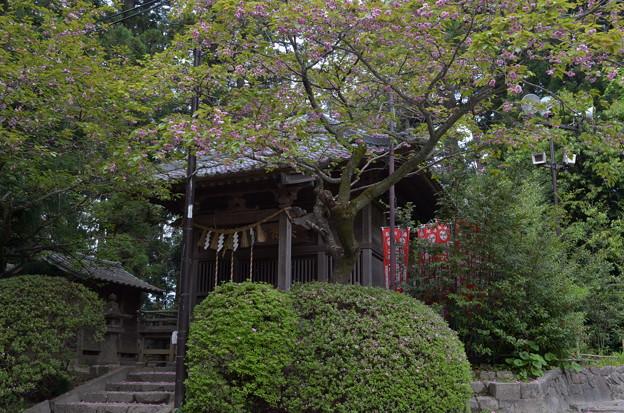 写真: 大崎八幡宮・太元社