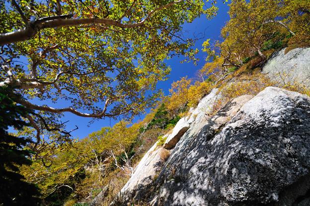 コバルトブルーと黄色い山