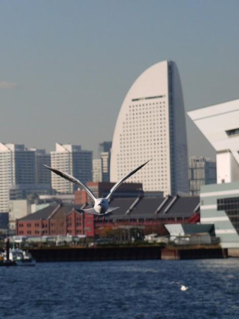 港のカモメ