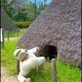 Photos: 狸さんのお尻