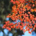 秋の陽を浴びて