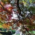 Photos: 高取城跡紅葉12