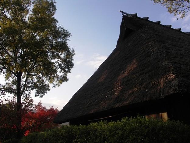 Photos: 大和民族公園紅葉16