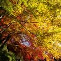 Photos: 談山神社紅葉33
