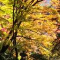 Photos: 談山神社紅葉31