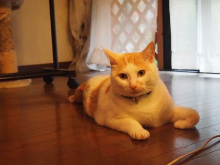 問いかける猫