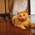 写真: 問いかける猫