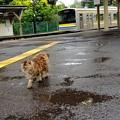 Photos: 雨の駅ネコ?