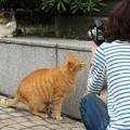 Photos: 猫撮り。