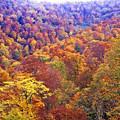 写真: 晩秋のブナ林