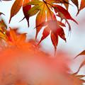 Photos: 東京都心にも秋が来た