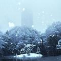写真: 雪で霞むドコモタワー2