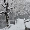 写真: 御苑雪景