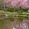 春の水辺II