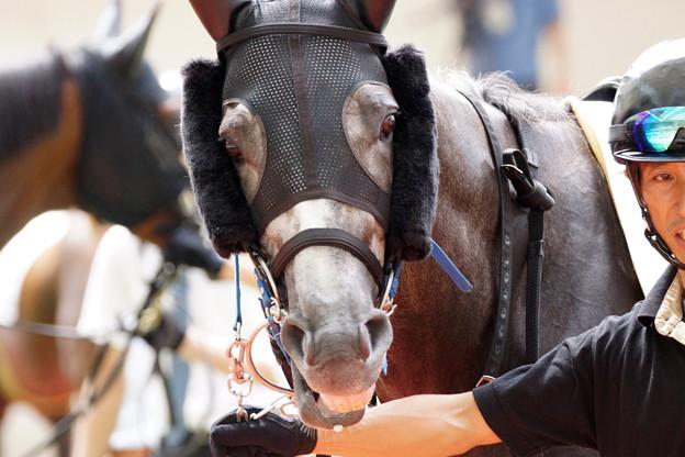 エキサイトゲーム エキサイトゲーム : ほそぼそと競馬 ほそぼそと競馬 最近は愛馬の応援をまった
