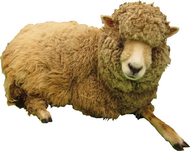 羊縮小用2