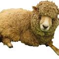 Photos: 羊縮小用2