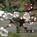 Photos: 寒中9