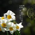 Photos: 寒中11