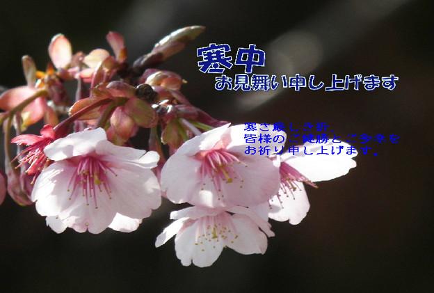 Photos: 寒中12