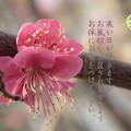 Photos: 寒中13