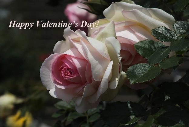 写真: Valentine1