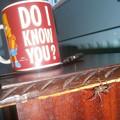 写真: spider