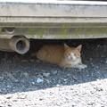 Photos: 暑い日は車の下に限るね・・・。