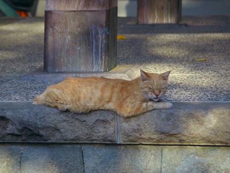 小江戸の猫