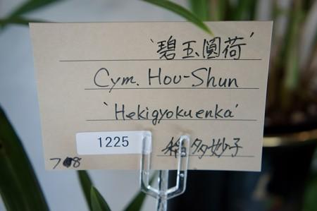 中国春蘭 碧玉圓荷(ヘキギョクエンカ)