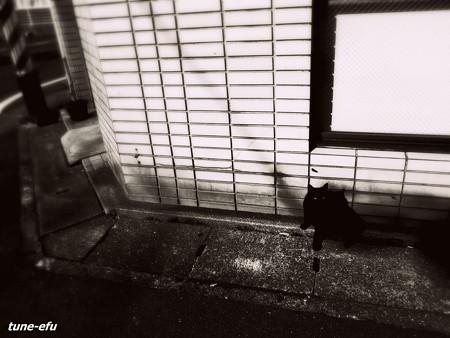 街猫100