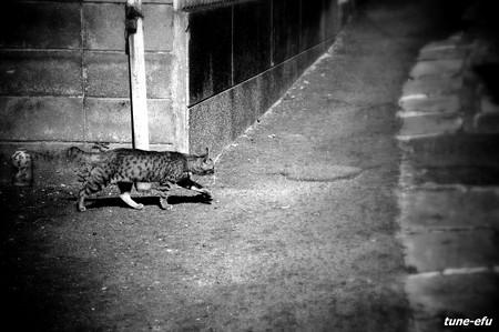 街猫105
