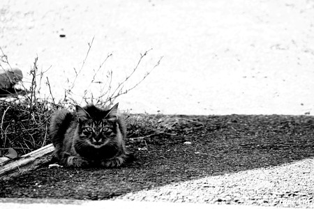 街猫112
