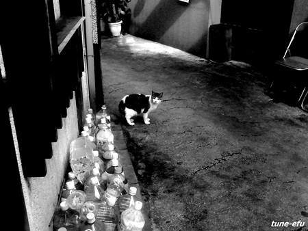 街猫127