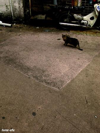 街猫128
