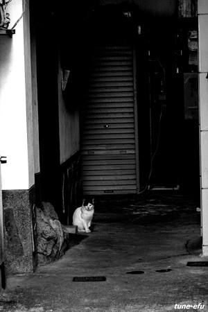 街猫138