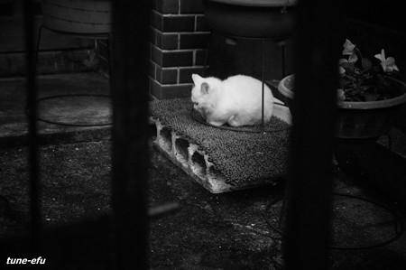 街猫148