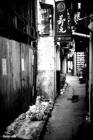 街猫150