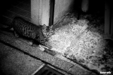 街猫151