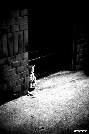 街猫155
