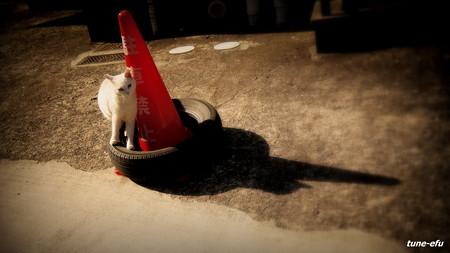 街猫162