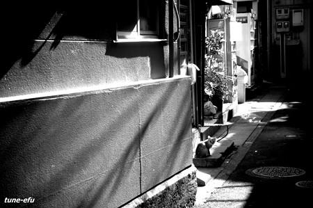 街猫164