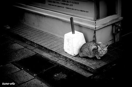 街猫169