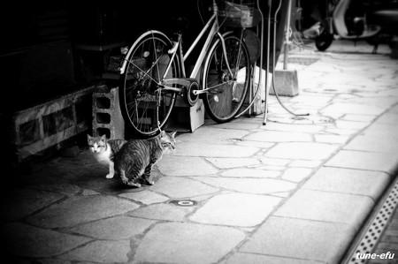 街猫171