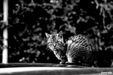 街猫183