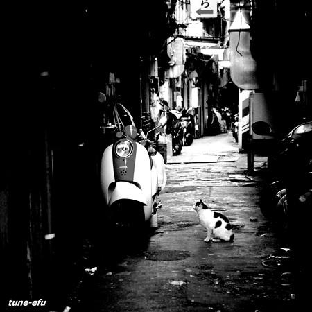 街猫186