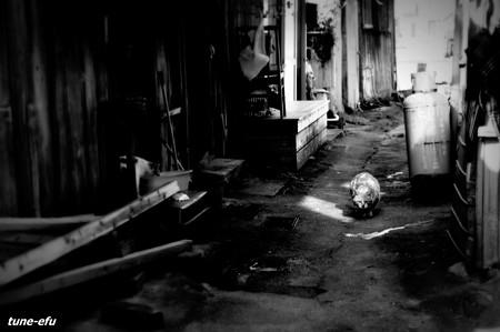 街猫191