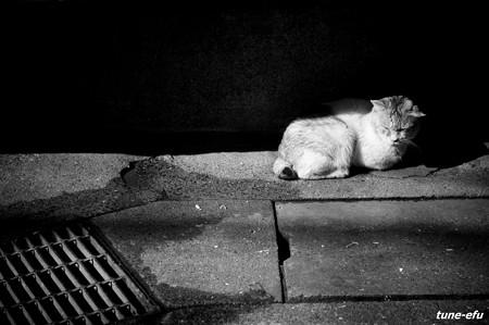 街猫192