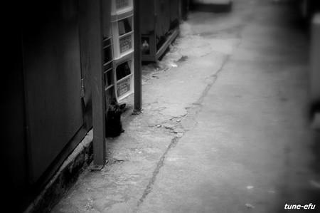 街猫193